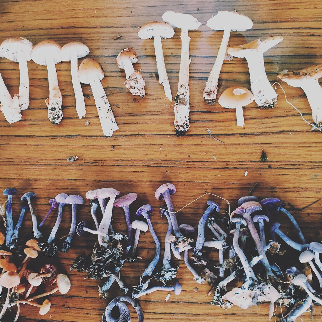 Forest Foragers, Mushroom Foraging Course