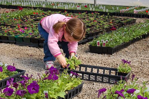 Petunia Picking