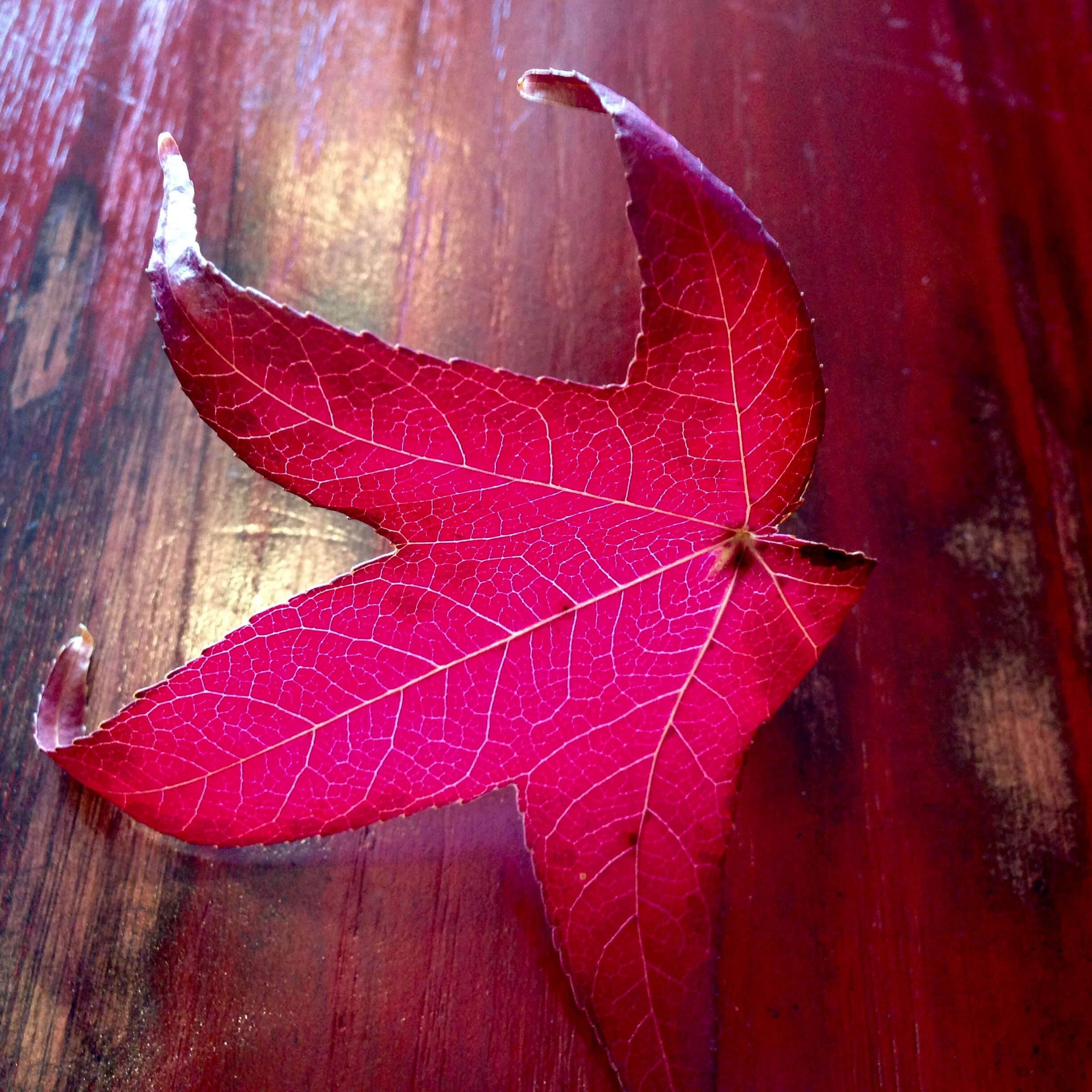 North Berkeley Leaf