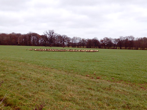 Clustered Sheep