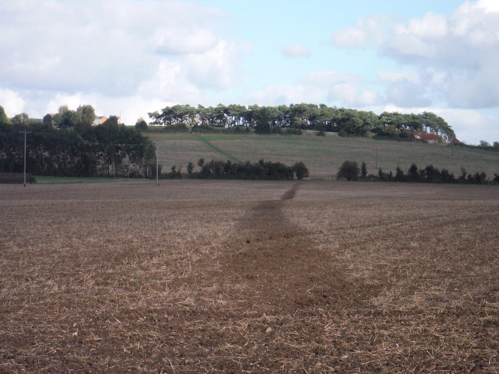 Crossing arable fields up to Aston Abbotts SWC Walk 194 Aylesbury Vale Parkway to Aylesbury