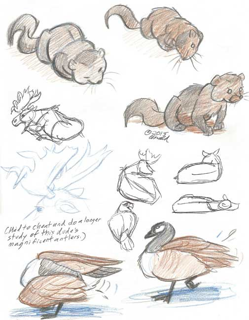 8.5.14 - Maine Wildlife Park Sketches