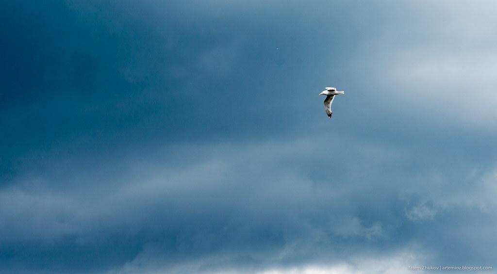 Bird flying in the sky.jpg