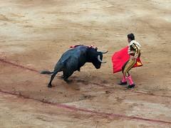tradition(0.0), performing arts(0.0), animal sports(1.0), cattle-like mammal(1.0), bull(1.0), sports(1.0), bullring(1.0), entertainment(1.0), matador(1.0), performance(1.0), bullfighting(1.0),