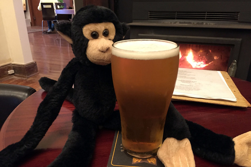 Monkey enjoying a beer