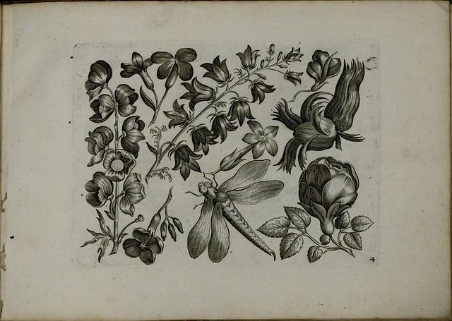 Viridarium Novum c