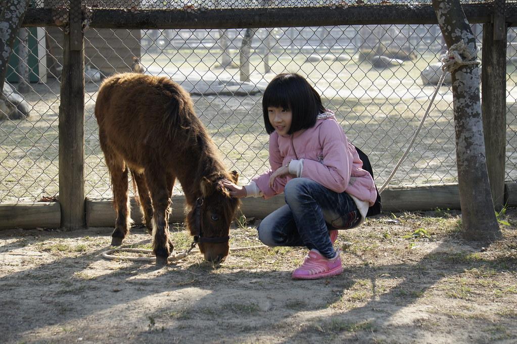 台南市學甲區頑皮世界野生動物園區 (21)