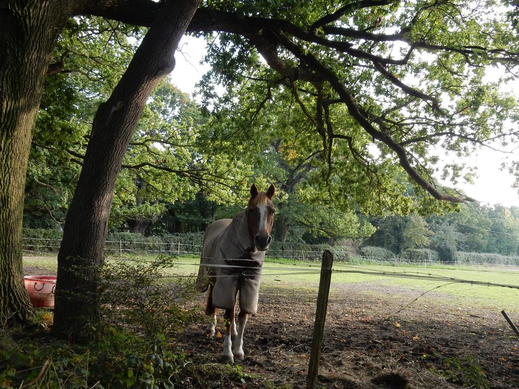 Horse Under a tree. South Woodham Ferrers Circular