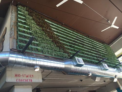 beerline herb wall