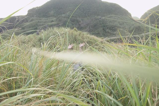 被芒草淹沒的燦光寮山