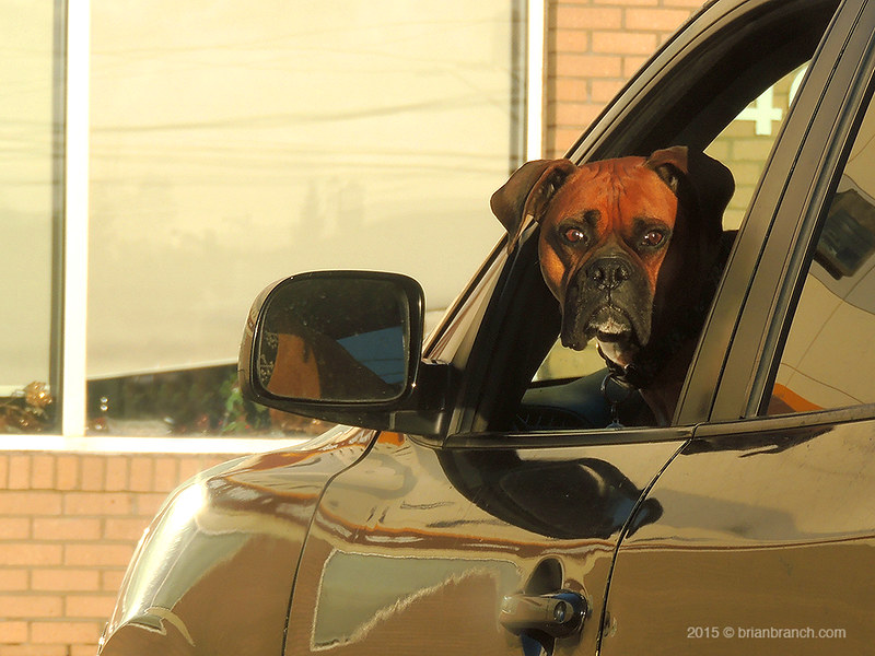 DSCN9983_dog_driver