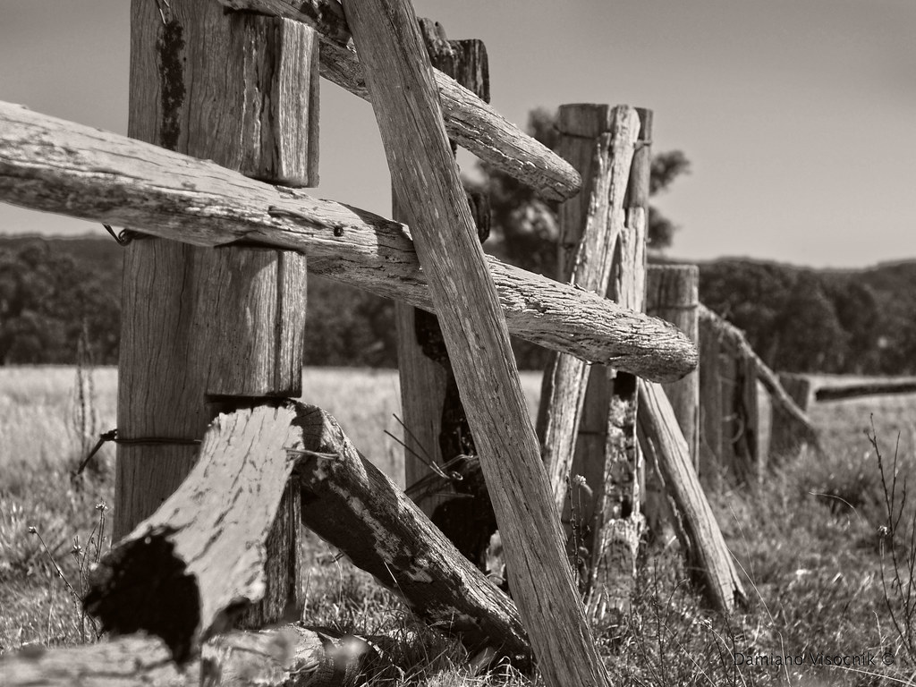 old cattle yards_c