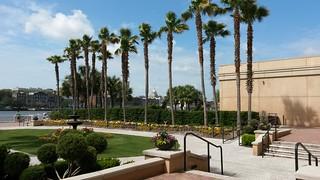 more palmtrees