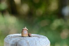Acorn wearing a beret