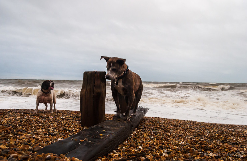 Jez on the groyne