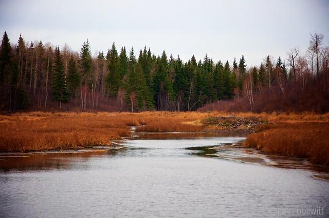 Elk Island - Alberta - October 2015