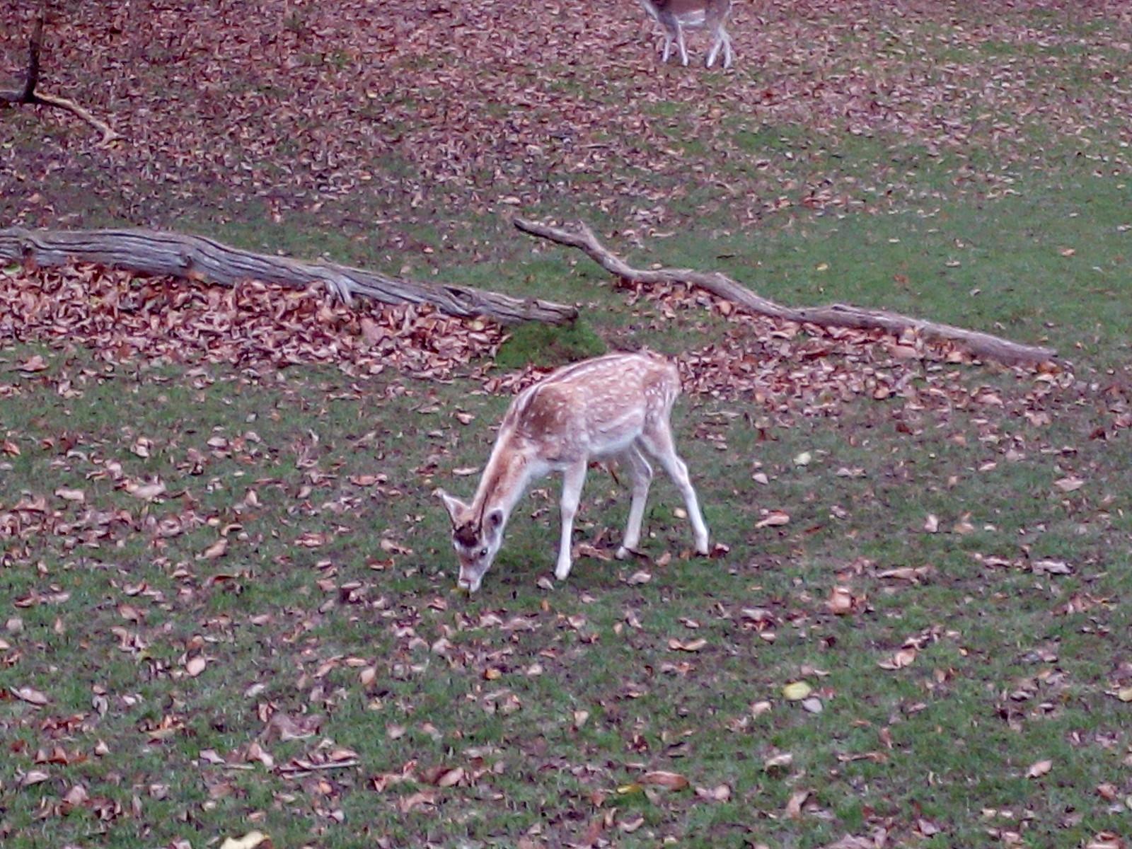 Winter in Knole Park