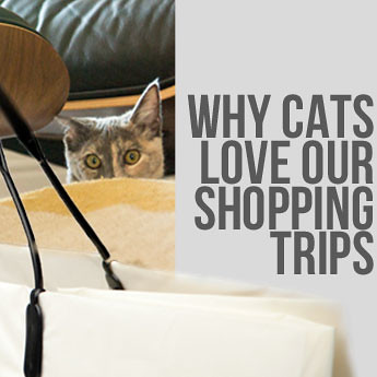Cats Love Shopping