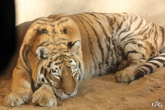 Besuch Winter Zoo Hannover 28.11.201532
