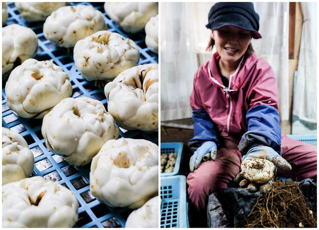 Hokkaido-Lily-Bulb-Factory