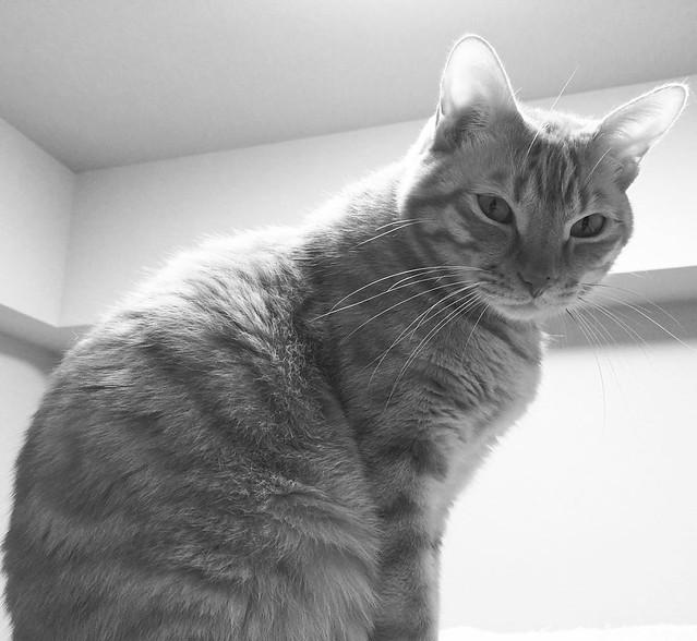 #cat #猫 #ねこ 😼😼😼