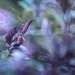 Purple Haze by jonesography