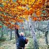 Recogiendo hojas de haya