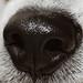 Macro Dog Nose