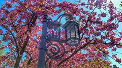 Spring Streetlight