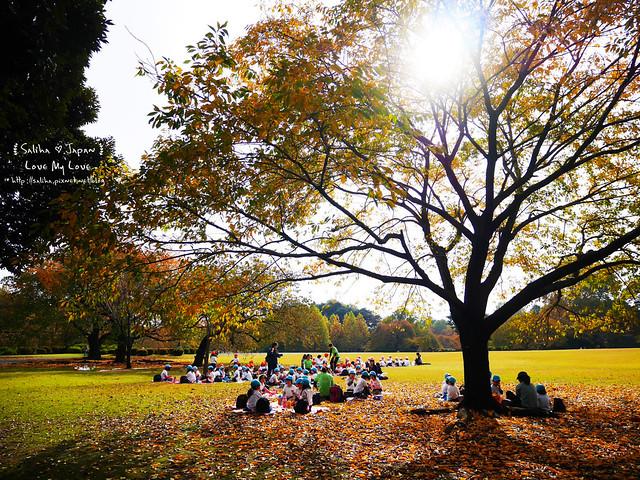 日本東京自由行新宿御苑庭園景點 (2)