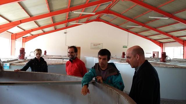 Washbacks at Glenfarclas distillery