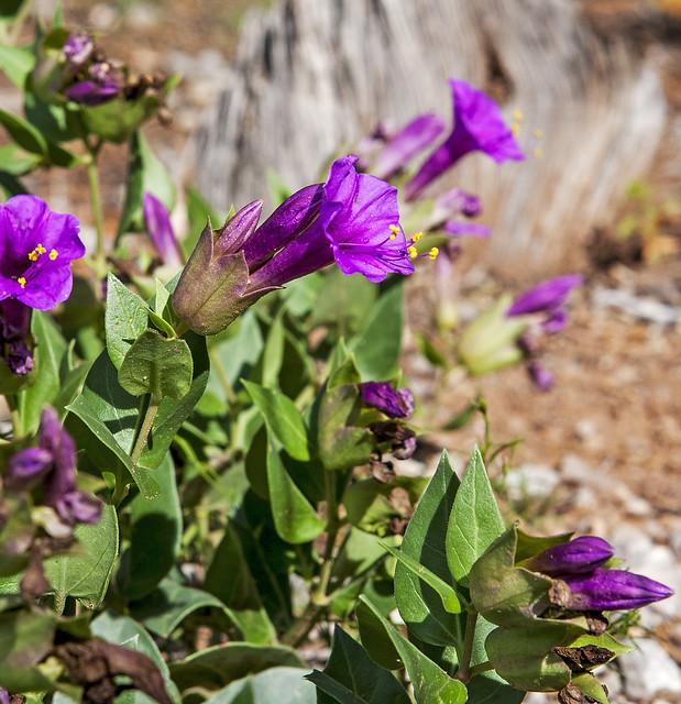 Wild Flower 20d_2319