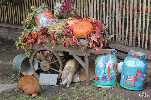 Sonntags-Besuch im Tierpark Friedrichsfelde 04.10.20158