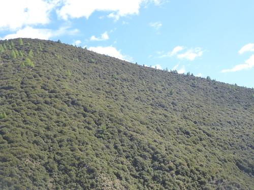 CH-Route-Danba-Bamei (12)
