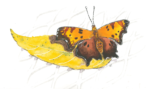 20151001_butterfly_citw_w