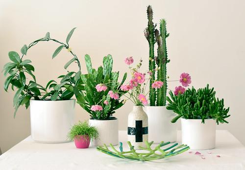 plants-flowers02