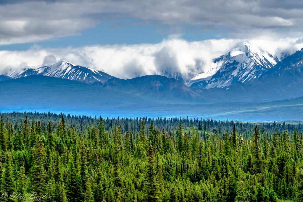 Hotels Near Denali National Park