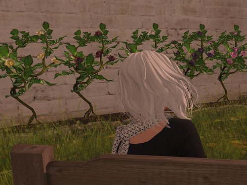 Admiring her roses