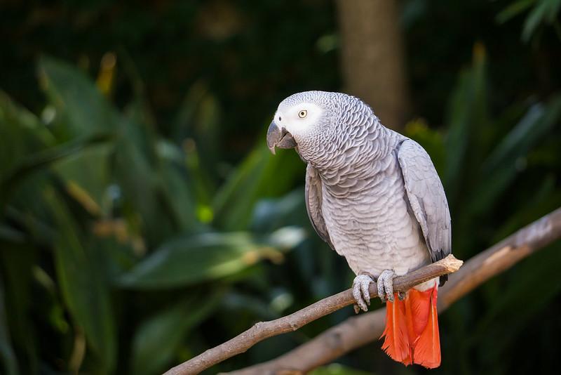 20151018 - 001 - MonteCasino Bird Garden