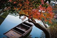 Some kind of tree and some kind of boat 😄 took this in Suzhou at one of the gardens.  #suzhou #china #rowboat #boat #tree #autumn #苏州 #江苏省 #中国