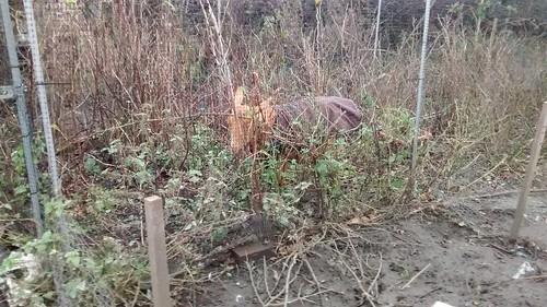 Goatin fruit cage Dec 15 (1)