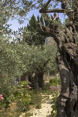 Jerusalem 045