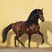 Beautiful Bujaco in Spain by mari-mi