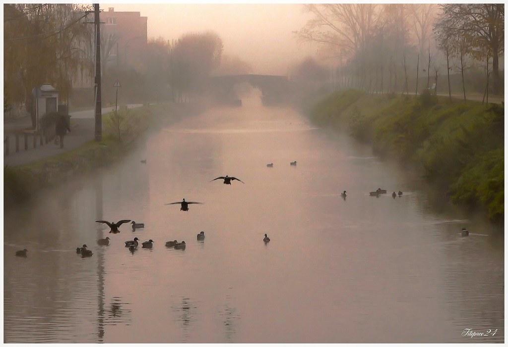 Matin de Brouillard sur le canal 23110987139_8d4c84ea84_b