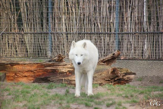 Kurzbesuch im Zoo 20.12.201516