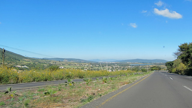 161029 1914 MX Chapala to Guadalajara, Highway 23, Ixtlahuacán de los Membrillos, the wild sunflowers were everywhere