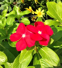 IMG_1310e - Red Flowers