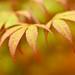 Autumn In My Heart by Anna Kwa