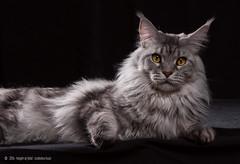 Blende: my cat