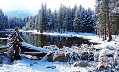 Fallen, Tioga Lake, Yosemite 5-15